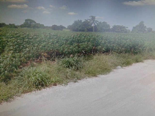 ที่ดินเหมาะสร้างหมู่บ้านจัดสรร land forhousingproject-สำหรับ-ขาย-ซอยทุ่งกลมตาลหมัน--soi-tungklomtanman 20150427132918.jpg
