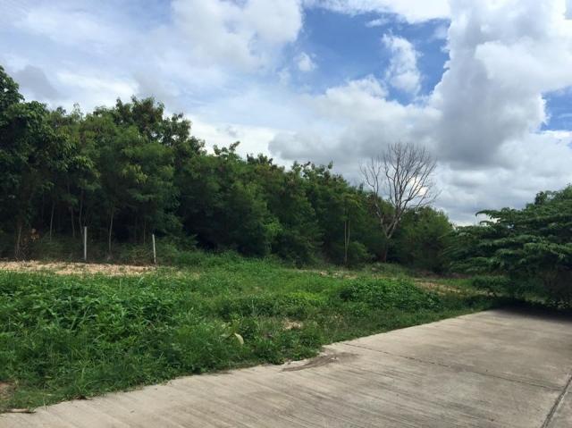 ที่ดินเหมาะปลูกบ้าน  land for house building-สำหรับ-ขาย-ซอยเขาตาโล-soi-khao-talo 20150908145129.jpg