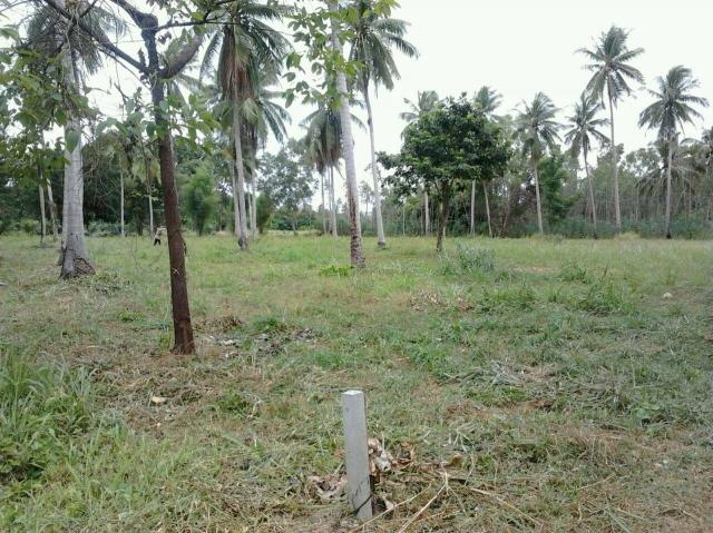 ที่ดินเหมาะปลูกบ้าน  land for house building-สำหรับ-ขาย-ห้วยใหญ่-hauy-yai 20151117211142.jpg