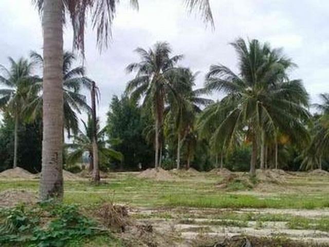 ที่ดินเหมาะปลูกบ้าน  land for house building-สำหรับ-ขาย-ห้วยใหญ่-hauy-yai 20170930100828.jpg