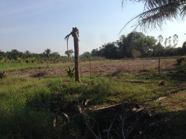 ที่ดินเหมาะปลูกบ้าน  land for house building-สำหรับ-ขาย-ห้วยใหญ่-hauy-yai 20180122103604.jpg
