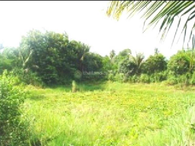 ที่ดินเหมาะปลูกบ้าน  land for house building-สำหรับ-ขาย-ตะเคียนเตี้ยะ-takientia 20180213114128.jpg