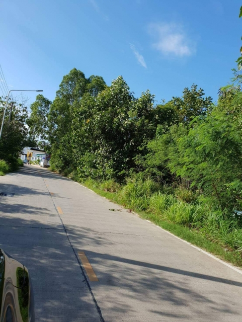 ที่ดินเหมาะสร้างคอนโด  land for condo building-สำหรับ-ขาย-ทุ่งกลม-ซอยl-soi-tungklom-talman 20180906083108.jpg