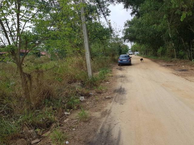 ที่ดินเหมาะปลูกบ้าน  land for house building-สำหรับ-ขาย-ตะเคียนเตี้ยะ-takientia 20190505141953.jpg