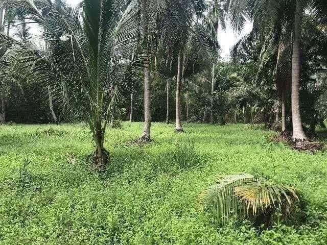 ที่ดินเหมาะสร้างบ้านพักหรือรีสอร์ท -สำหรับ-ขาย-ตราดl-trat-province 20201124193801.jpg