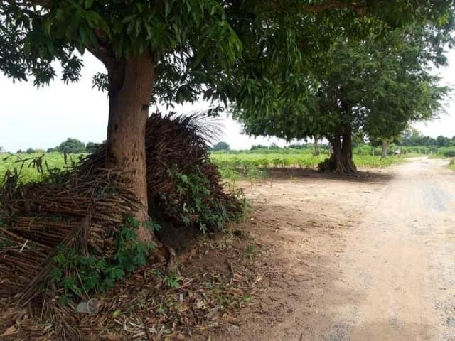ที่ดินเหมาะสร้างหมู่บ้านจัดสรร land forhousingproject-สำหรับ-ขาย-ซอยทุ่งกลมตาลหมัน--soi-tungklomtanman 20210111153445.jpg