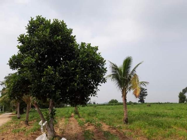 ที่ดินเหมาะสร้างหมู่บ้านจัดสรร land forhousingproject-สำหรับ-ขาย-ซอยทุ่งกลมตาลหมัน--soi-tungklomtanman 20210111153450.jpg