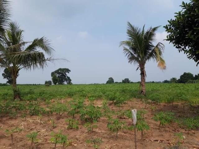 ที่ดินเหมาะสร้างหมู่บ้านจัดสรร land forhousingproject-สำหรับ-ขาย-ซอยทุ่งกลมตาลหมัน--soi-tungklomtanman 20210111153507.jpg