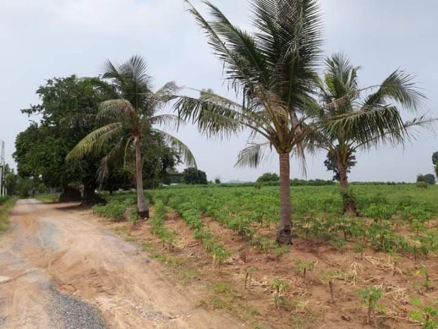 ที่ดินเหมาะสร้างหมู่บ้านจัดสรร land forhousingproject-สำหรับ-ขาย-ซอยทุ่งกลมตาลหมัน--soi-tungklomtanman 20210111153510.jpg