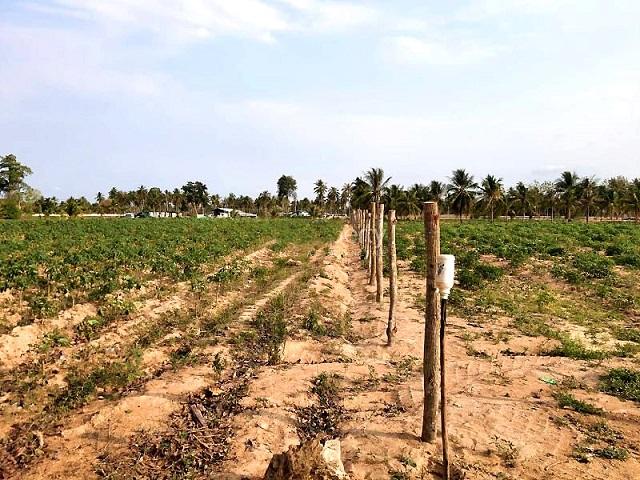 ที่ดินเหมาะสร้างหมู่บ้านจัดสรร land forhousingproject-สำหรับ-ขาย-ห้วยใหญ่-hauy-yai 20210407094444.jpg