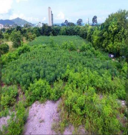 ที่ดินสร้างอาคารพาณิชย์ land for shop building-สำหรับ-ขาย-นาจอมเทียนพัทยา-na-jomtien-pattaya 20210421183651.jpg